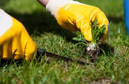 Garden and Yard Weed Control